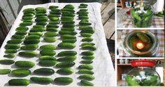Geniální trik jak udržet okurky stálé čerstvé až několik měsíců! Budou Vám stačit 2 ingredience! | Vychytávkov Sprouts, Zucchini, Watermelon, Fruit, Vegetables, Cooking, Food, Funguje To, Massage
