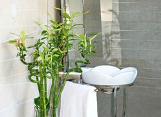 It's my goal to do more gardening this Spring, and I cannot wait to fill my house with plants! I've heard that you can effectively grow plants in the bathroom, but I didn't believe it was possible! Lucky for all… Continue Reading →