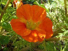 Die Saisongärtnerin: auch im Herbst gibt es noch farbenfrohe Blüten