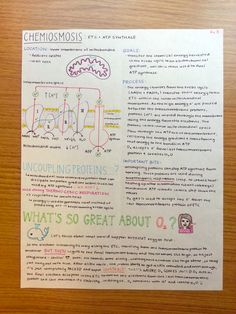 Photosynthesis & Cellular Respiration Summary Sheets hallo there! I got TON of messages asking if i could post the complete sets of my bio study sheets so here they are! First two are photosynthesis,...