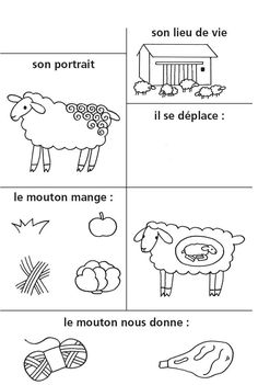 Fiche d'identité Extinct Animals, Zoo Animals, Animals For Kids, Fun Facts About Animals, Animal Facts, French School, Petite Section, French Lessons, School Lessons