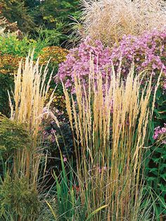 1000 images about flowers plants and garden on pinterest for Ornamental grass that looks like wheat