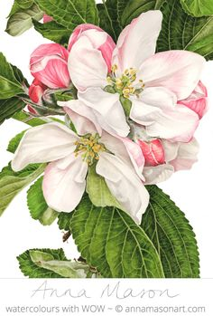 "Apple Blossom © 2008 ~ annamasonart.com ~ 48 x 36 cm (19"" x 14"")"