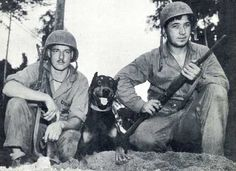 9 Doberman Pinscher Jack at Bougainville WWII Photo