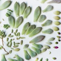 Learn how to propagate succulents from their leaves! A great way to multiply your collection for free!