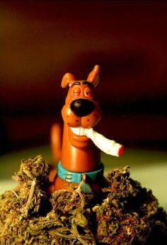 Scooby Doo Smoking Weed | weed smoke joint high scoodydoo ashgabez420 •