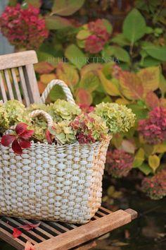 Blue Hortensia: Romantic autumn with hydrangeas . Autumn Garden, Autumn Home, Early Autumn, Beautiful Flower Arrangements, Beautiful Flowers, Hortensia Hydrangea, Raindrops And Roses, Rose Cottage, Fall Halloween