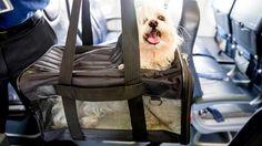 Не важно, куда вы собрались в путешествие - по России или же за границу. Но, если вы путешествуете не один, а в сопровождении собаки или кота - вам понадобится наша помощь! Напишите нам - http://animals-travel.ru/ или даже позвоните! Мы бесплатно проконсультируем вас, а при необходимости поможем с документацией на вывоз, перевозку животных. С радостью займёмся непосредственно перевозкой животных и не важно, куда вы отправляетесь. Комфортная перевозка животных по территории России и других…