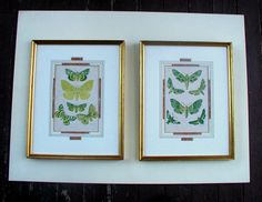 Vintage Moths Botanical Bookplate Insect Art Print by Mary Wellman Framed Antique Wall Decor by LionheartSalvage on Etsy