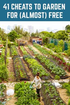 Garden Ideas Discover 41 Cheats To Garden For (Almost) Free Get free plants free tools free compost free pots fertilizers and more with these gardening cheats. Organic Gardening, Gardening Tips, Gardening Books, Gardening Gloves, Hydroponic Gardening, Gardening Supplies, Legume Bio, Home Vegetable Garden, Vegtable Garden Design