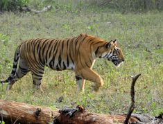 Karnataka Wildlife Tour offers best Tours to Indian Jungles. Ask price for Wildlife Tours of Karnataka and India Wildlife Tours. Wildlife Safari, Jungle Safari, Herd Of Elephants, Sloth Bear, Elephant Ride, Ooty, Stay Overnight, Munnar, Photography Tours