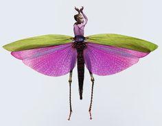 Insectes ~ Laurent Seroussi ~