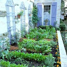 Lovely home vegetable garden up against the house with trellises for climbing crops.