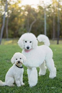 Meet 3 year old Ned and 7 month old Kelly who are currently starring in Big Brother Australia 2014!