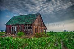 Old abandoned barn in a cornfield near Nashville, IL