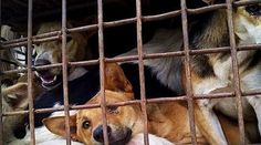 Petition · UK Prime Minister: Support The UK Parliament's Call To End The Dog Meat Trade! · Change.org