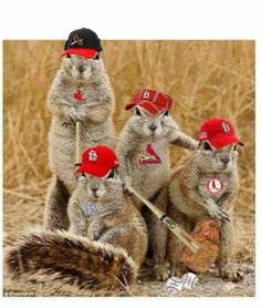 Gang of Rally Squirrels!!!