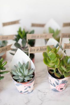 All kinds of wedding favor ideas to choose from. Succulent Wedding Favors, Best Wedding Favors, Wedding Fun, Invitation, Cactus, Cheap Favors, Guest Gifts, Succulents Diy, Bloom
