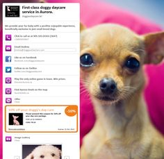 Doggy XO Daycare in Aurora Ontario www. Small Dog Breeds, Small Breed, Only Online, Facebook Likes, Online Games, Ontario, Aurora, Fur Babies, Funny