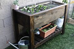 Bare Root - Growth - HOMEMADE: DIY Raised Garden Bed