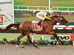 Irish Surf(2010)Giant's Causeway- Surfside By Seattle Slew. 3x4 To Storm Bird, 4x5 To Secretariat, 5x5 To Hail To Reason And Bold Ruler. 22 Starts 3 Wins 2 Seconds 4 Thirds. $277,910. Won Cougar II Stakes(G3).