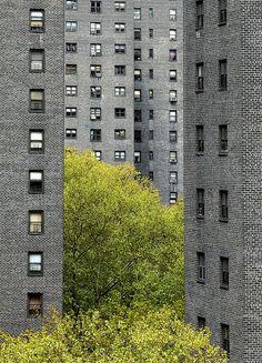 evocativesynthesis:    urban jungle (by idogu)
