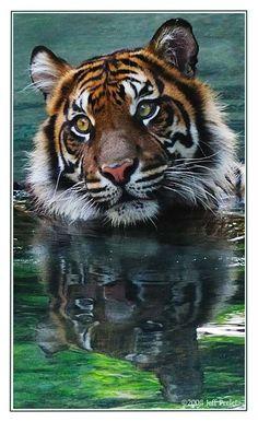 Photograph Cat in Water by Jeff Preletz on 500px