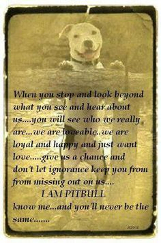 Loving a pitbull changes you forever.