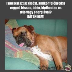 joreggelt kepes vicces idezet - Google keresés Facebook, Google, Dogs, Pet Dogs, Doggies