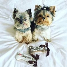 Your pets deserve customized treats. Photo: @gus_and_rosie