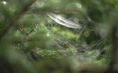 Ramen, Spider Art, Spider Webs, Beautiful Pictures, Beautiful Things, Hd Wallpaper, Dandelion, Spiders, Tangled