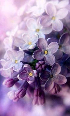 Source: tumblr Follow me on instagram for more #photography : https://www.instagram.com/raquelvsa/ | #Purple #Minimal #Minimalist #Colors #Aesthetic