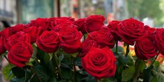 Close-up of red roses in a bouquet during Sant Jordi Festival, Barcelona, Catalonia, Spain Poster Print by Panoramic Images x