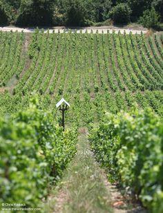 Loire Valley Wine, Vineyard, Vine Yard, Vineyard Vines