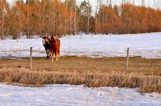 Almost spring on the prairies. 500px / Untitled photo by Henry Leung.