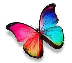 Morpho de color mariposa, aislado en blanco photo