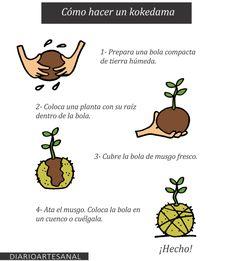 A kokedama is a plant grown on a ball of moss and substrate, it is deci . Ikebana, String Garden, Paludarium, Air Plants, Dream Garden, Garden Projects, Outdoor Gardens, Flower Arrangements, Orchids