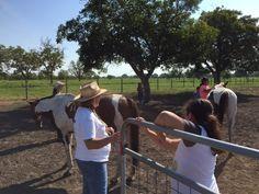 Equine Therapy Thursdays with our summer camp kids!!! #equinetherapy #ccaosa #GuadalupeCommunityCenter #summercamp