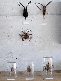 Naturalis: The taste of Petrol and Porcelain | Interior design, Vintage Sets and Unique Pieces www.petrolandporcelain.com