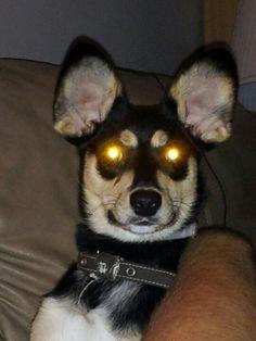 All Hail Hypno Doggie