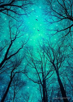 May It Be A Light (Dark Forest Moon) Art Print by Soaring Anchor Designs Forest Tattoos, Dark Forest Tattoo, Forest Photography, Art Photography, Moon Print, Tree Silhouette, Light Art, Dark Art, Framed Art Prints