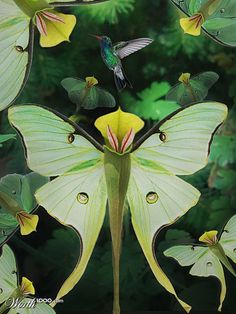 ✯ The pitcher plant - looks like a butterfly! It's so beautiful....you almost don't even notice the Hummingbird.