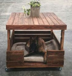 Coffe table + dog bed... Nice!