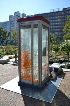 Public Phone Booths Transformed Into Giant Fish Aquariums