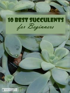 10 Best Succulents for Beginners - here is my short list of great easy care succulents to get started with...  Succulent Plants | Gardening | Houseplants