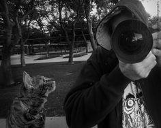 Curious Kitty | Flickr: partage de photos!