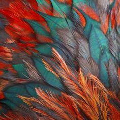 Turquoise & Orange feathers....umm yes please :)