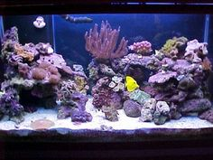 You have fish tank for indoor that's mostly called aquarium. People keep the fish and aquatic creatures in this place . Read Awesome Aquascaping Ideas You Will Totally Love 75 Gallon Aquarium, Saltwater Aquarium Fish, Saltwater Tank, Reef Aquarium, Salt Water Fish, Salt And Water, Reef Aquascaping, Marine Aquarium, Aquarium Decorations