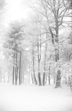 Winter Forest   There is a lot of snow in Germany and it is …   Flickr