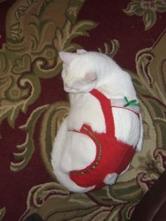 Joybies Red Festive Christmas Piddle Pantstm for X Small Cat Measuring 1113 From Collar to Base of Tail >>> Click image to review more details.